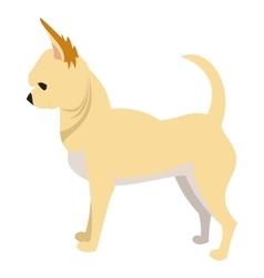 Chihuahua dog breed vector