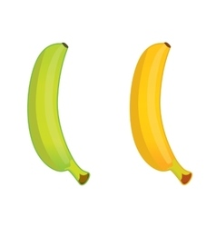 green and ripe banana vector image