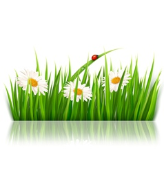 Nature background with green grass and flowers vector image
