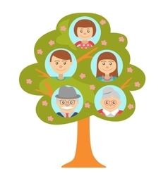 Cartoon generation family tree isolated on white vector image vector image