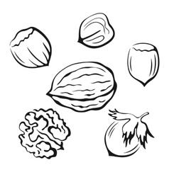 Nuts black pictograms vector
