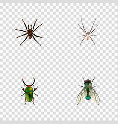 Realistic spider housefly arachnid and other vector