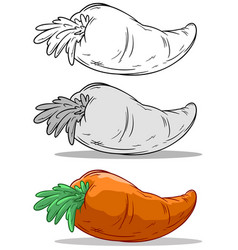 Cartoon orange big carrot set vector