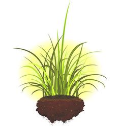 Grass leaves and roots vector