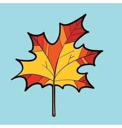 Maple red leaf nature autumn season vector
