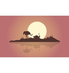 Silhouette of two ostrich and reflection scenery vector