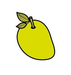 Isolated mango fruit design vector