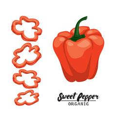 Cartoon sweet pepper ripe red vegetable vector