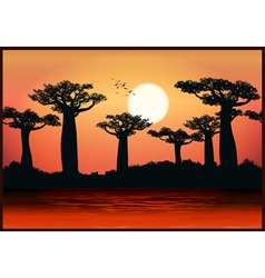 baobab trees vector image vector image