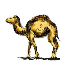 Color line sketch a camel vector
