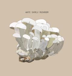 Sketch - mushrooms shimeji king vector
