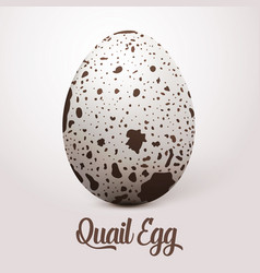 Realistic white egg with spots on vector