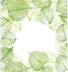leaves frame vector image vector image
