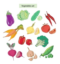Vegetables set detailed vector