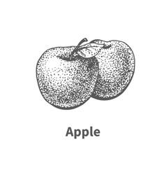 hand-drawn apple vector image vector image