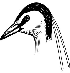 Head of a Bird vector image