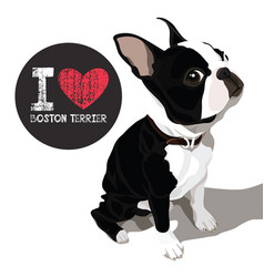 i love boston terrier vector image vector image