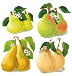 set of ripe pears vector image