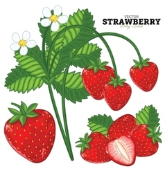 Strawberry set vector