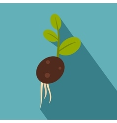 Green potato sprout from the root icon flat style vector image