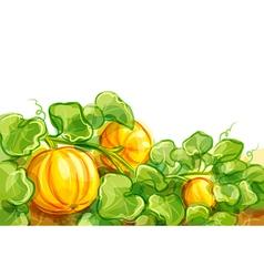growing pumpkins - EPS10 vector image vector image