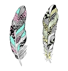 Stylized feathers vector