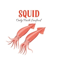 Squid in cartoon style vector