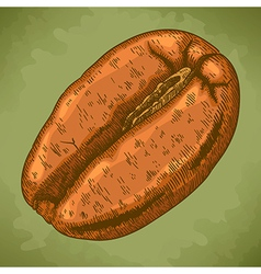 engraving coffee bean retro vector image