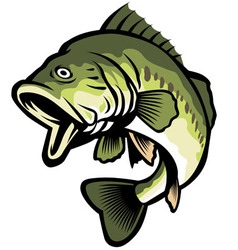 Freshwater fish vector