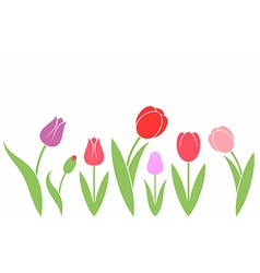 Tulip isolated flowers on white background vector
