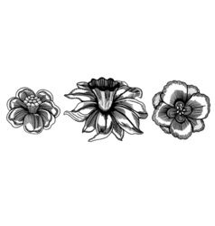 Set of sketchy flower vector