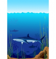 underwater world with sharks vector image vector image