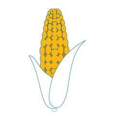 corn vegetable icon vector image vector image