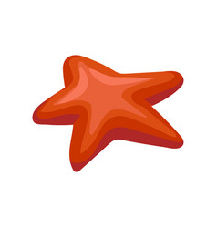 red starfish invertebrate sea creature vector image