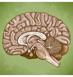 Engraving human brain retro vector