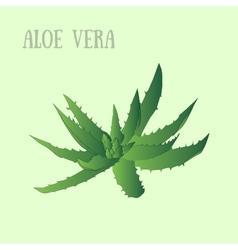Aloe vera in pot vector