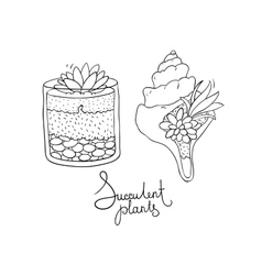 glass terrariums and the seashell with vector image vector image