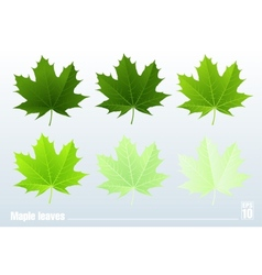 Green maple leaf Set vector image