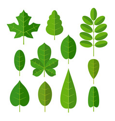 set leaf flat color isolated vector image