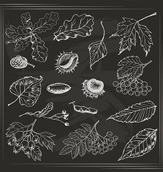 Set of Autumn leaves seeds and berries on the dark vector image