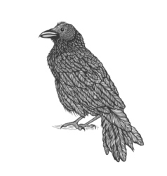 Raven line art style of crow hand drawn vector