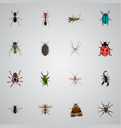 Realistic poisonous emmet midge and other vector