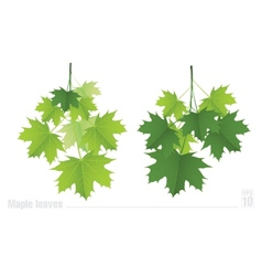 Maple branch with green leaves on a white vector