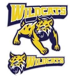 Angry wildcat mascot vector