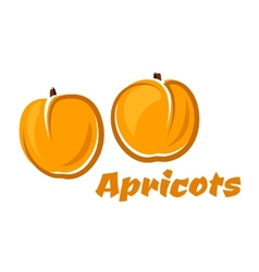Aroma orange apricot fruits poster vector image