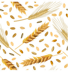 pattern wheat and rye ears and grains vector image