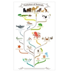 Biological evolution animals scheme vector