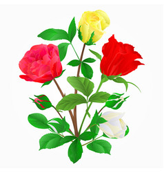 bouquet of rosebuds vector image