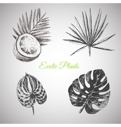 Hand drawn tropical plants and exotic vector