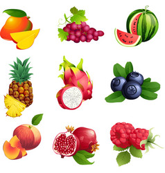 Set of fruits and berries with leaves vector image vector image